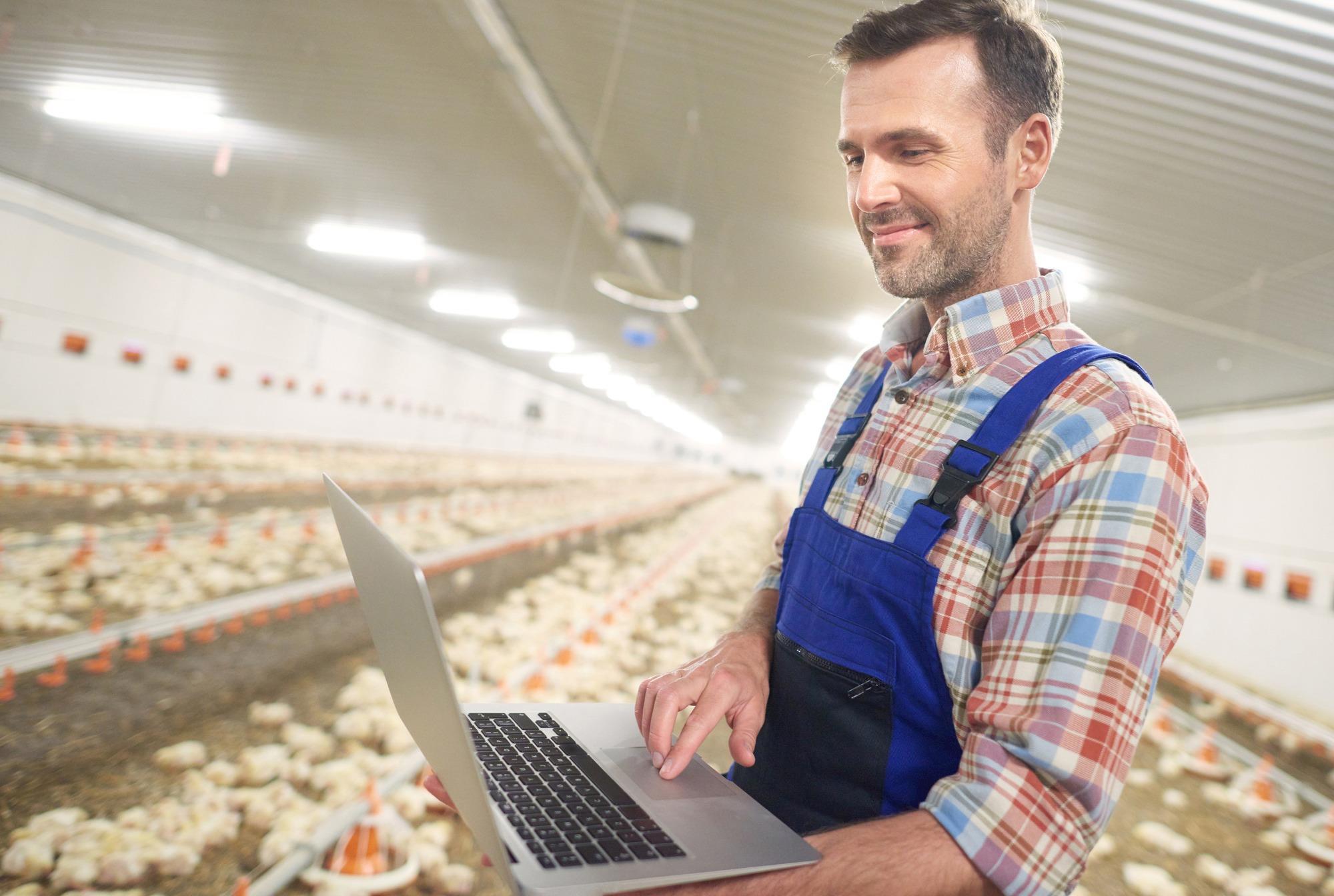 O papel do produtor no desenvolvimento da avicultura brasileira