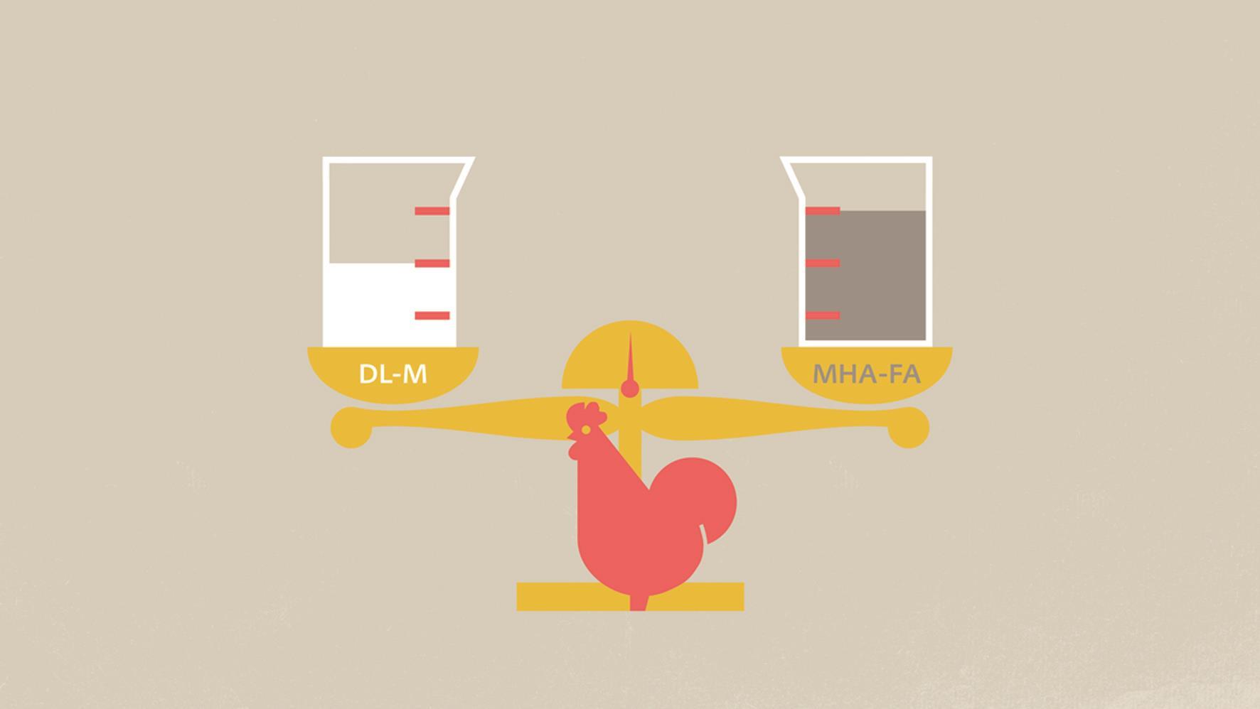 Novo estudo com frangos de corte encerra debate de 30 anos em torno da biodisponibilidade de distintas fontes de metionina
