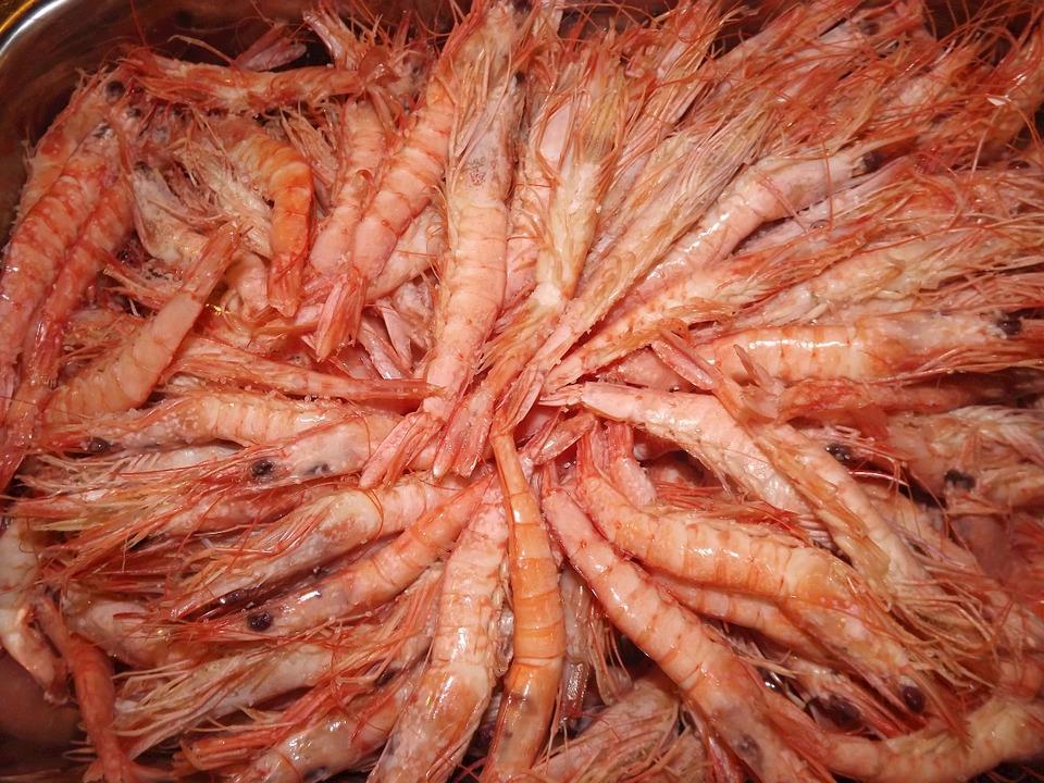 Pesquisa da Apta que avalia o cultivo em conjunto de camarão e lambari é premiada em congresso