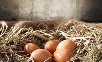 Supermercado britânico vai oferecer 100% de seus ovos neutros em carbono até 2022