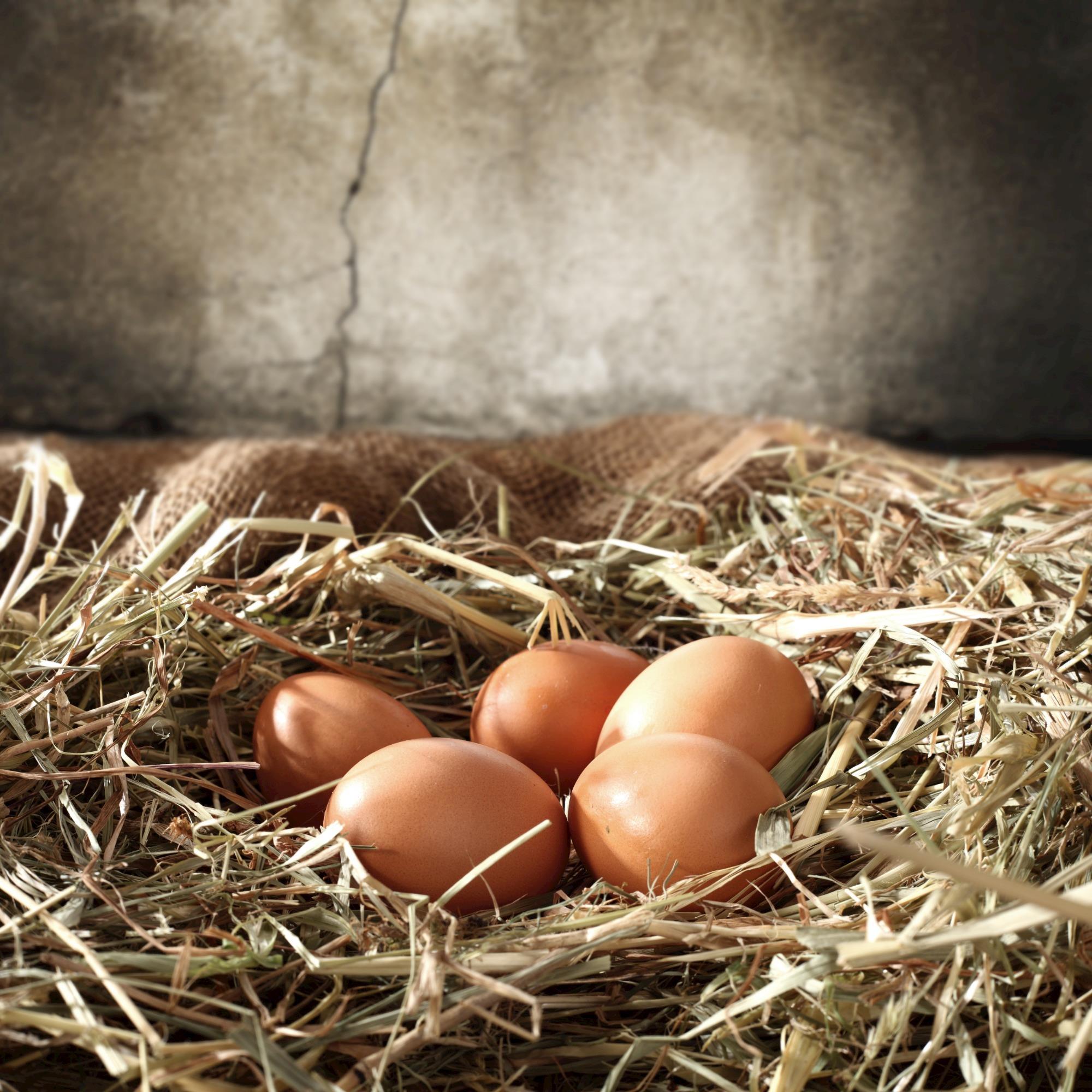 Bem-estar animal na produção de ovos é tema de treinamento no ES