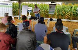 Dia de campo ajuda produtor a obter silagem de alta qualidade