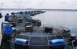 Peixes, peixes, fotos atualizadas