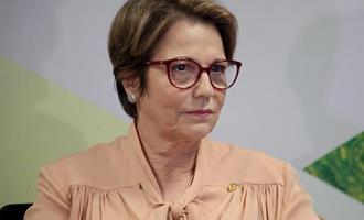 Ministra apresenta oportunidades de investimentos no agro brasileiro a empresas estrangeiras