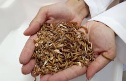 Pesquisadores brasileiros estudam inclusão de insetos na alimentação animal