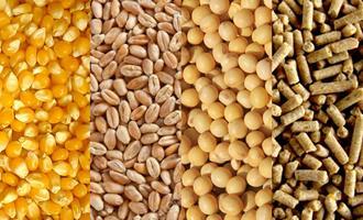 Serra Catarinense é a nova aposta para produção de cereais de inverno