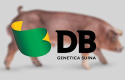 Genetics with high zootechnical performance will be presented at AveSui EuroTier 2019