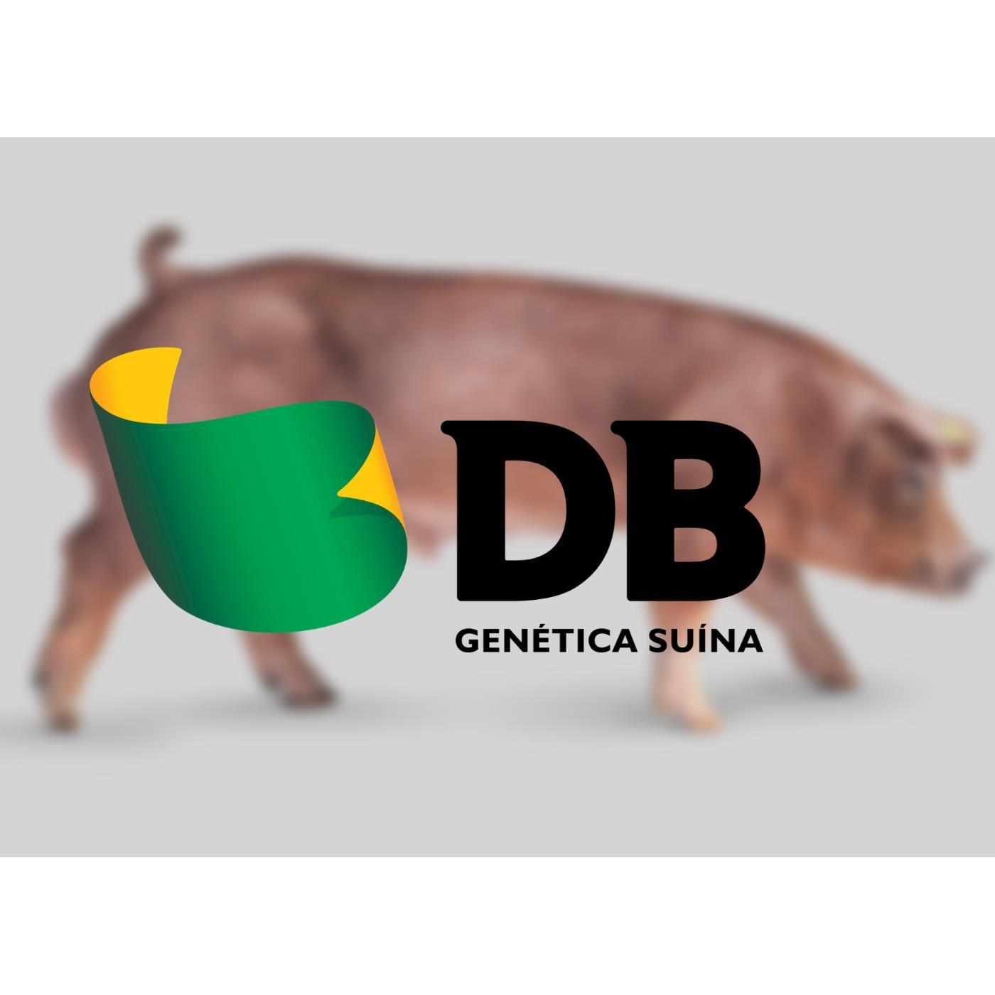 Genética com destaque em performance zootécnica será apresentada na AveSui EuroTier