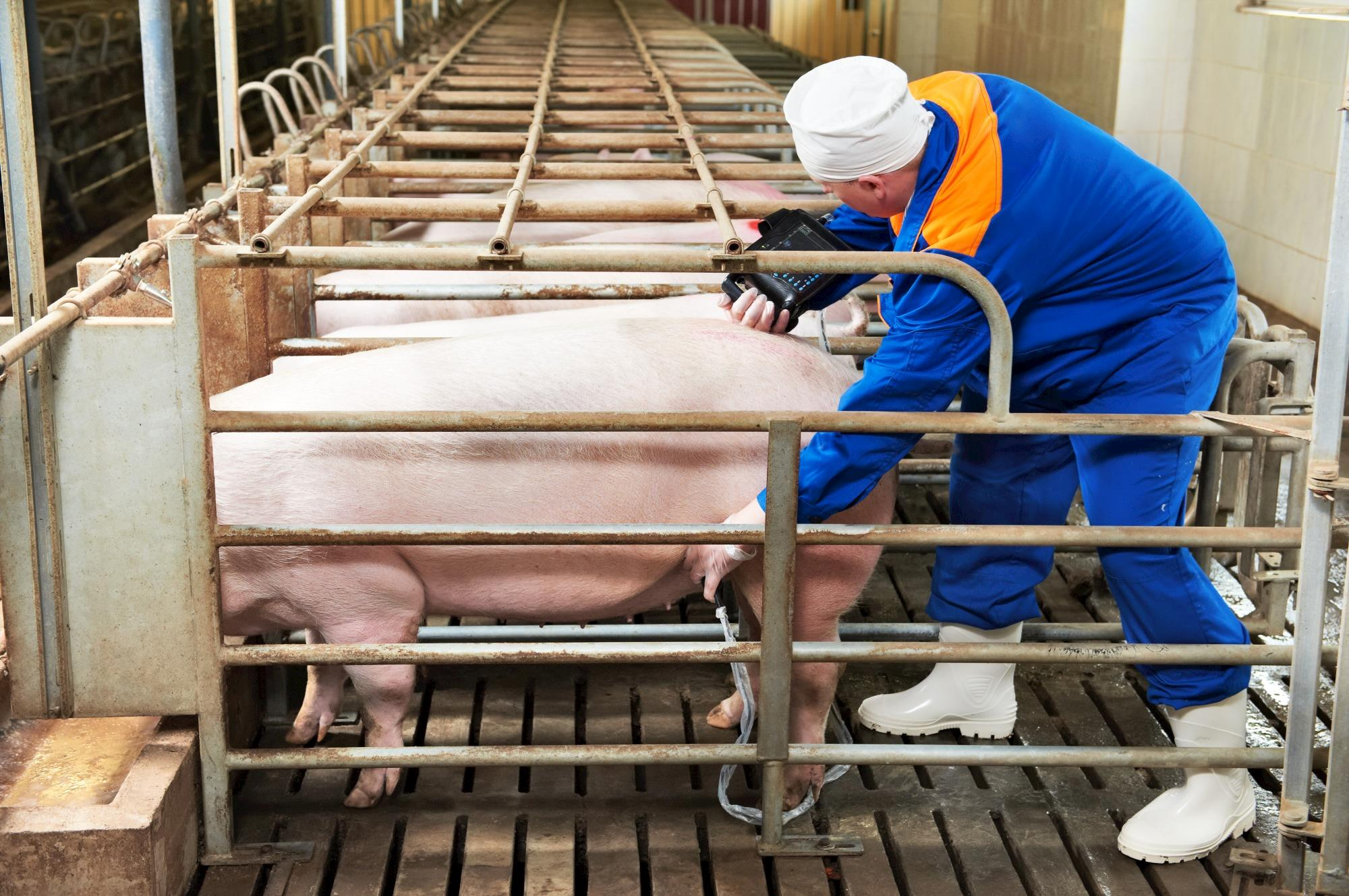 Workshop proposes to maximize results with Artificial Insemination