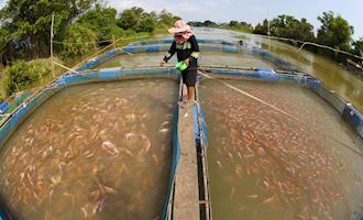 AveSui EuroTier aborda quatro pilares da piscicultura em painel
