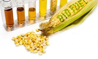 Governador de MS anuncia planta de etanol de milho no Estado