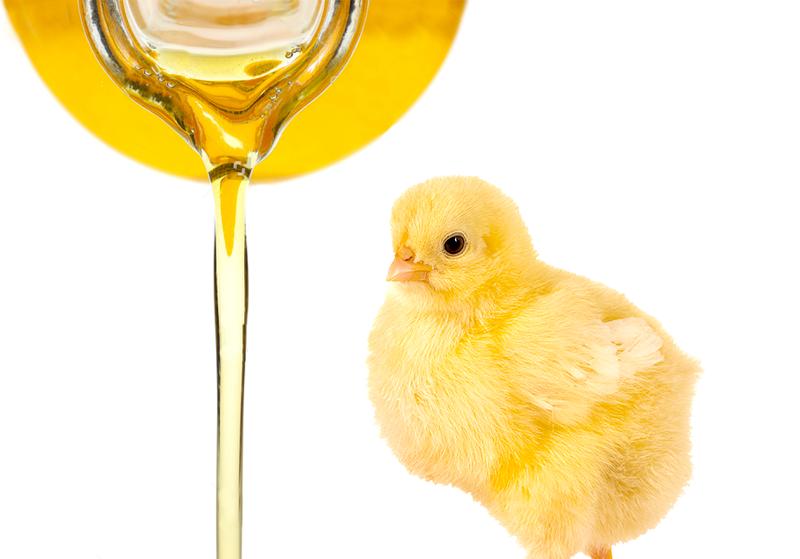 Emulsificantes na dieta de frangos de corte