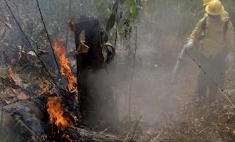 """""""Misturar a questão dos alimentos com a questão da floresta é oportunismo"""", avalia professor"""