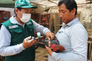 Mais de 4500 produtores de aves foram beneficiados com a vacinação contra Newcastle em Arequipa