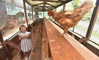 Mantiqueira instala galinheiro dentro de mercado no Rio de Janeiro