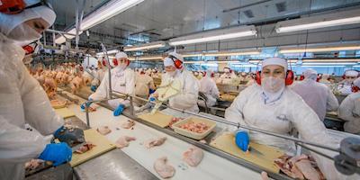 Arábia Saudita proíbe importação de 11 aviários brasileiros