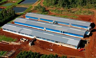 Estruturas pré-moldadas são tendência na produção de suínos e aves