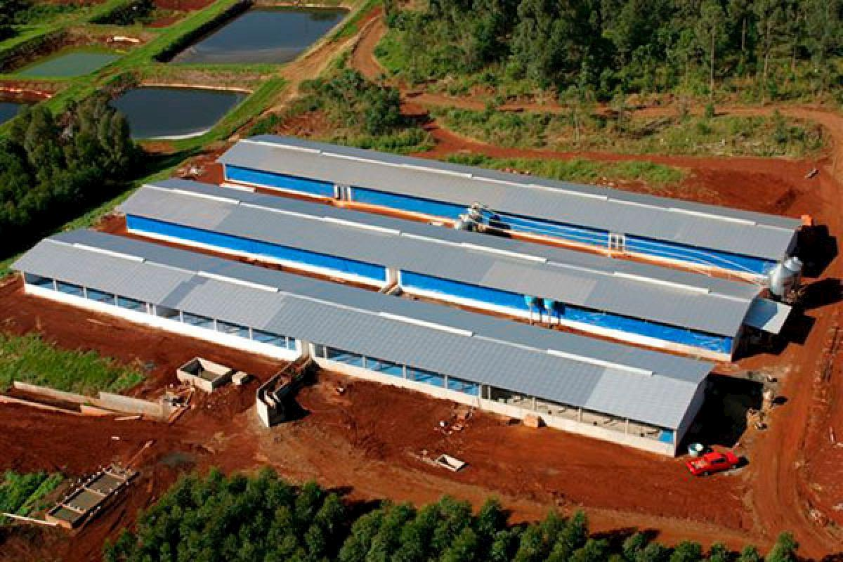 Prefabricated structures are a trend in pig and poultry production