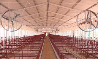 Conheça os benefícios do uso de telhas térmicas em granjas