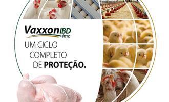 Biovet Vaxxinova lança nova vacina contra Gumboro em frango de corte: Vaxxon IBD IMC