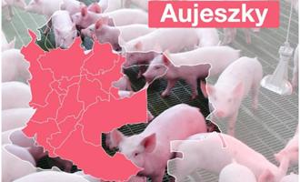 ICA declara primeira zona livre de doença de Aujeszky