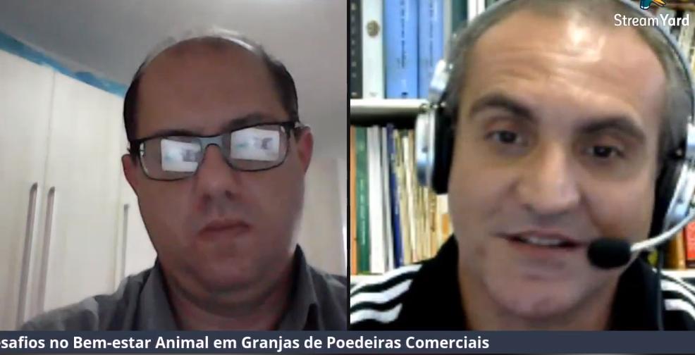 LIVE: Desafios no Bem-estar Animal em Granjas de Poedeiras Comerciais