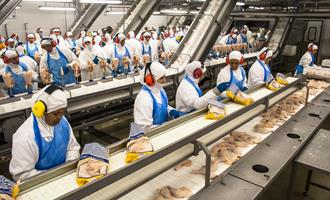 Na Bahia, abate de frango tem aumento recorde e sexto crescimento consecutivo