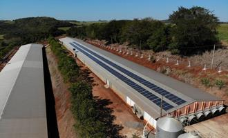 Aviário prevê redução de até 90% na conta de luz com energia solar