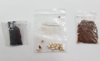 Mapa identifica presença de fungos, bactérias e ácaro em pacotes de sementes não solicitados