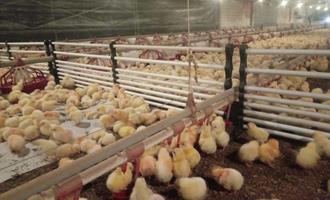 Presente em 5 países, Diviaves vai levar soluções para aviários na AveSui 2021