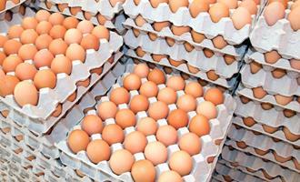 Baixa oferta mantém alta nos preços dos ovos