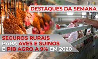 DESTAQUES - Seguros rurais para aves e suínos e PIB agro a 9% em 2020