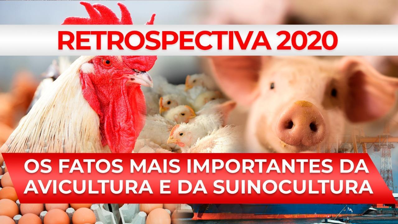RETROSPECTIVA 2020 - Os fatos mais importantes da avicultura e da suinocultura
