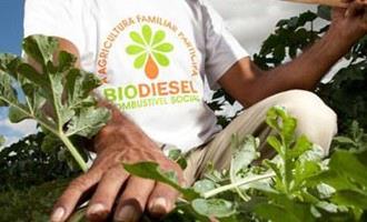 Selo Biocombustível Social gera renda para agricultores familiares