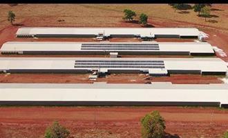 BRF estimula energia solar nas granjas de produtores integrados