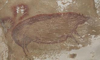 Suínos e humanos: uma relação de mais de 45 mil anos