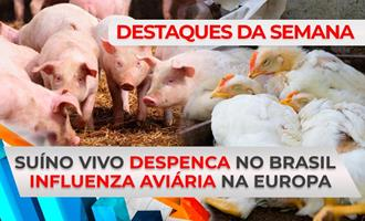 DESTAQUES - Suíno vivo despenca no Brasil e influenza aviária assusta Europa