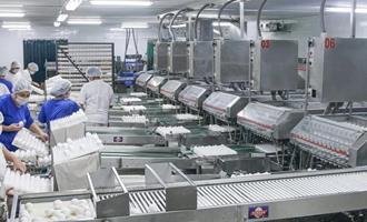 Globobiotech produz ovos embrionados para a produção de vacinas no Butantan