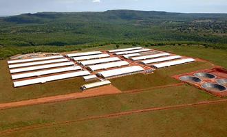 Cooasgo inicia povoamento da Granja Rio Verde, uma das mais modernas do Brasil
