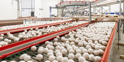 Katayama Alimentos investirá  R$ 15 milhões em 2021