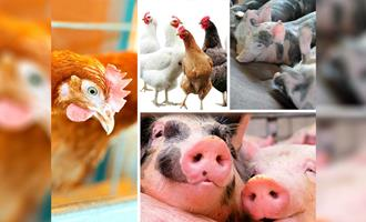Chile testa modelos de pecuária regenerativa