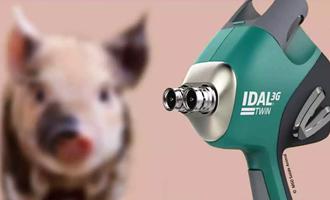 Vacinação de Precisão sem agulhas na produção de Suínos na AveSui Online 2021