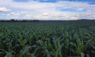 Produção agrícola sustentável cresce no Brasil nos últimos dois anos