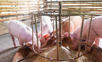 Nutrição adequada somada a biosseguridade ajudam na redução dos antimicrobianos