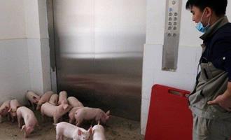 """Criação de suínos em """"fazendas verticais"""" é acelerada na China e isso afetará preço da carne no Brasil"""