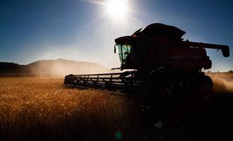 Solução para a escassez de grãos: SC e RS investem nas culturas de inverno