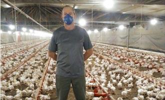 Produtor otimiza uso da ração e melhora conversão alimentar das aves com manejo correto