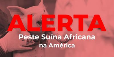 Haiti registra mais um caso de Peste Suína Africana nas Américas