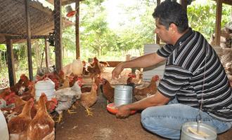 O setor avícola tocantinense segue ganhando destaques e investimentos