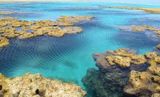 Crise climática ameaça biodiversidade dos recifes brasileiros e pode transformá-los em